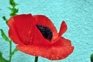 flower-767599_640
