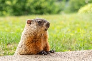 ADHD And The Groundhog Day Cycle